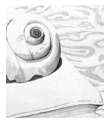 Shell Drawing — Click to Enlarge
